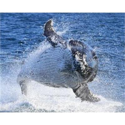 Go Whale Watching - Sydney (Weekend Departure)