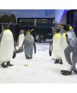 SEA LIFE Sydney Aquarium Penguin Passport