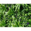 Lavandula Vertical Garden   UV Stabilised