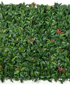 Photinia Vertical Garden / Screen 1m by 1m Panels