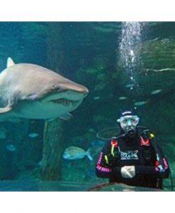 Shark Diving - Sydney Aquarium Darling Harbour - Weekday