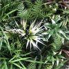 Desert Fern Bespoke Vertical Garden | Green Wall UV Resistant 90cm X 90cm
